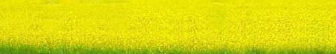 Музей Івана Гончара: Вечорниці на Андрія та майстер-класи в Києві 13 грудня