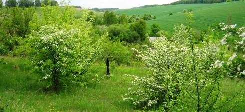 Продаётся красивый участок с шикарным видом на холмы Обуховские Карпаты 24 км от Киева от 6 до 18 соток